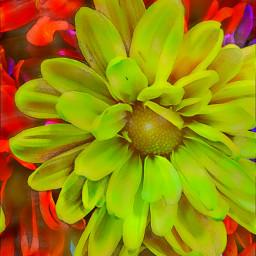 flowerbouquet acmemarket bensalem fridayevening summer2016