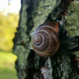 nature naturephotography mygarden myinspiration naturesbeauty