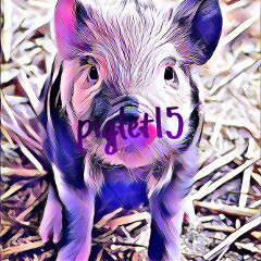 piglet15