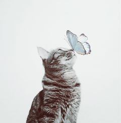 freetoedit edited clipart butterfly