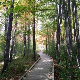 nature path photography fall