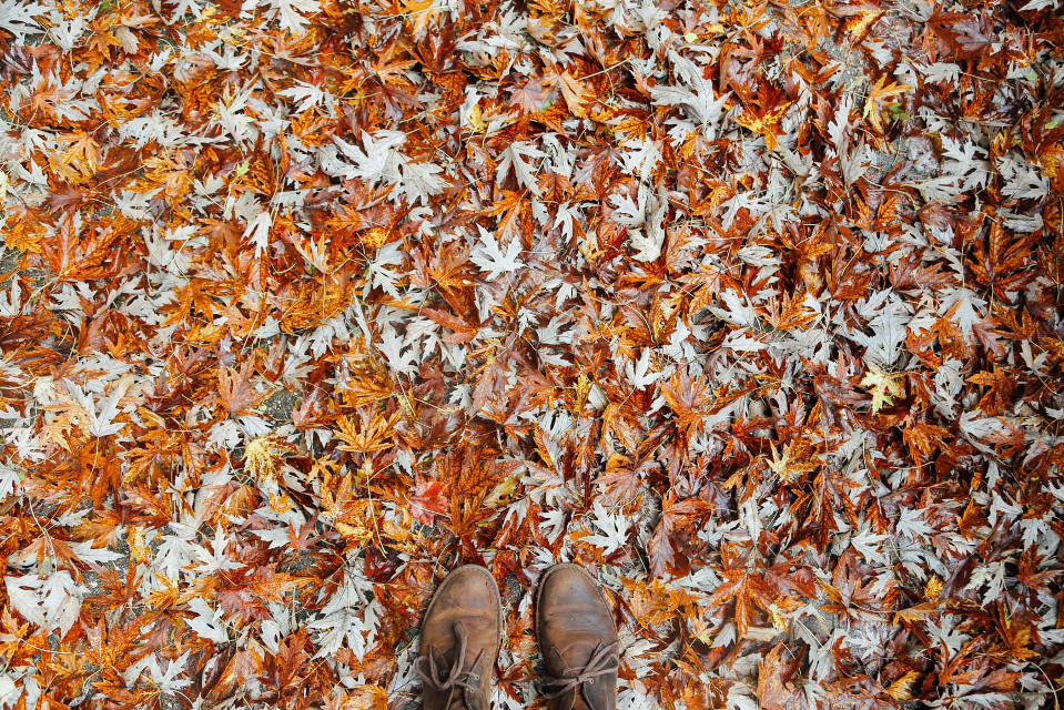 Showcase your editing talent. All you need is awesome in your life.  Unsplash (Public Domain)  #FreeToEdit #leaves #human #autumn #shoes #stylish #colours