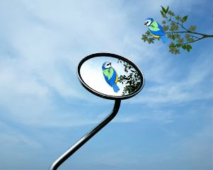 freetoedit reflection mirror image bird