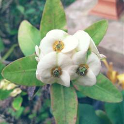 freetoedit flower plant green