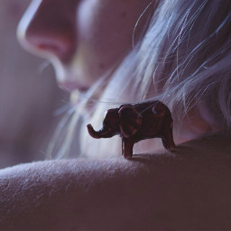 photography photoart animallover fantasyart artofvisuals freetoedit