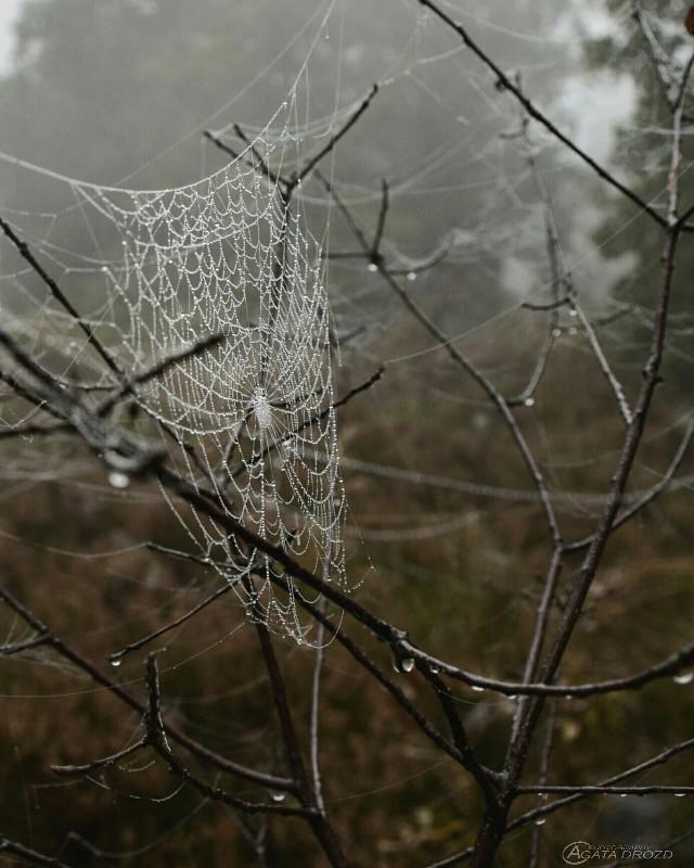 #photography  #mist  #fog  #autumn