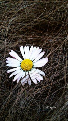 hdr naturephotography nature emotions flower freetoedit