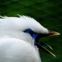 photography petsandanimals nopeople park birds