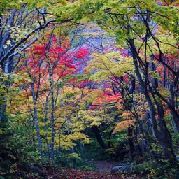 freetoedit nature autumnal japan