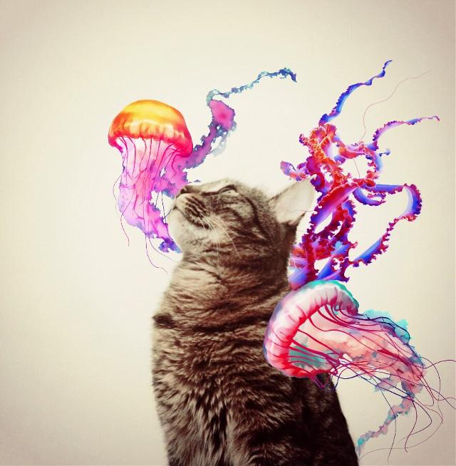 #FreeToEdit  #remixme  #cat #pet #feline #jellyfish  #ocean #creature