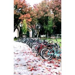 fall weather beautiful home bikes freetoedit